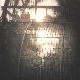 Palm House VI