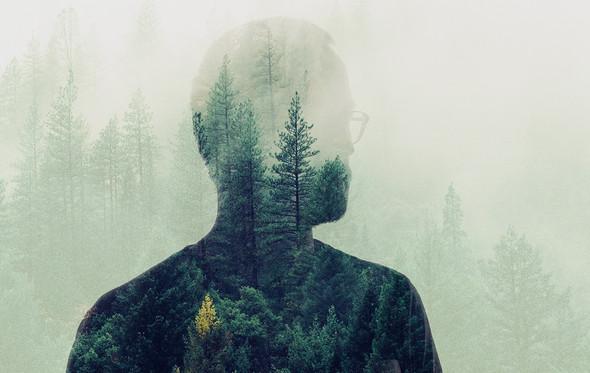 Will-Trees-2.jpg