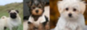 Small Breed Dog Hostel