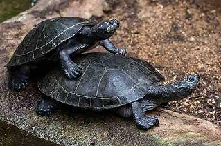 turtles-1.jpg