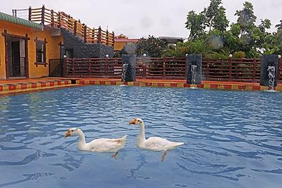 Swimming Pool 10.jpg