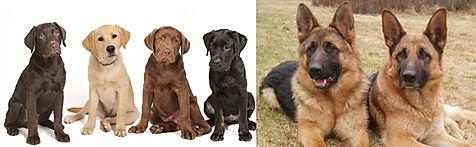 Hostel facilities for Medium Sized Dogs