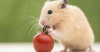 Hamster-Featured.jpg