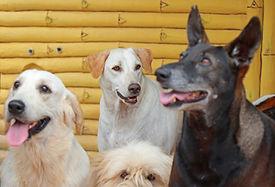 Happy Dogs.jpg