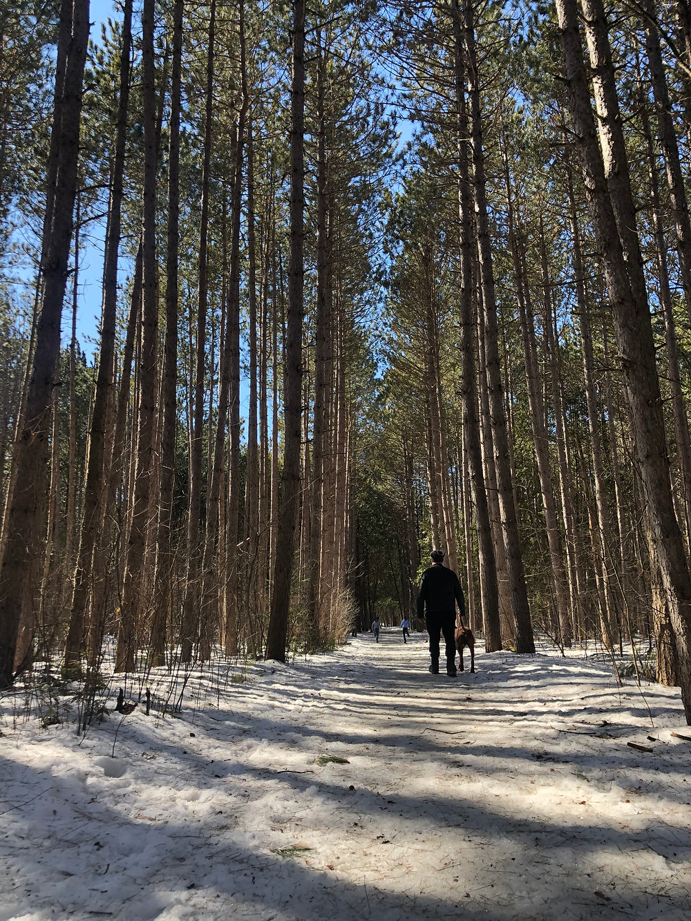 Social Distancing with Forest Therapy: Neil Melanson, Osteopathic Manual Practitioner at Pinhey Forest Trail, Ottawa