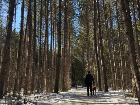 Social Distancing Strategies: Forest Therapy