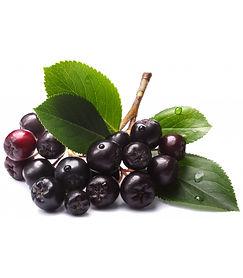 aronia-berry-powder.jpg