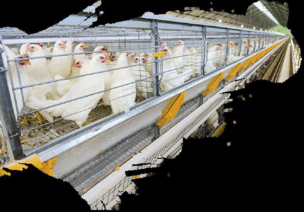 Condomínio Avícola