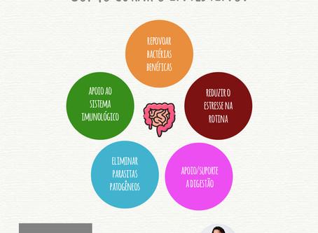 Como curar o intestino?