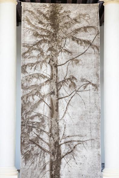 Jacopo Naccarato, Ritratto di un albero, 2019, tecncia mista, dimensioni ambientali, courtesy l'artista, credit Federico Rinaldi