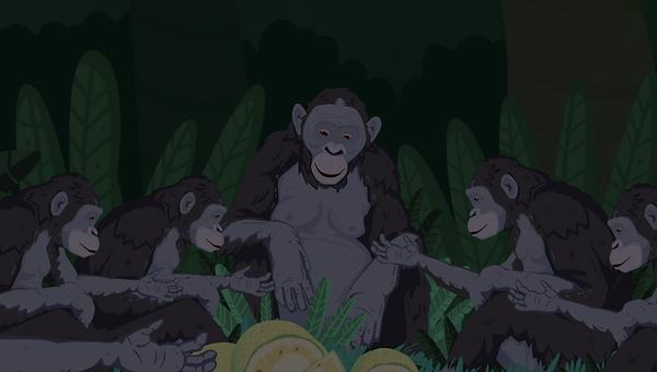 Bonobo educatie natuur dierentuin Ouwehands Zoo Dierenpark Peerdrops animatie