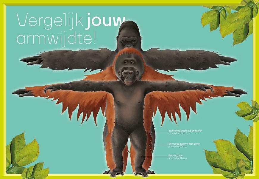 Definitieve ontwerp apen verhouding. Apen verhoudingen Ouwehands Dierenpark orihuis