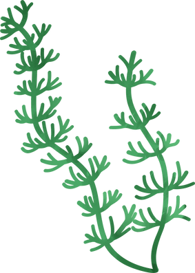 waterplant.png