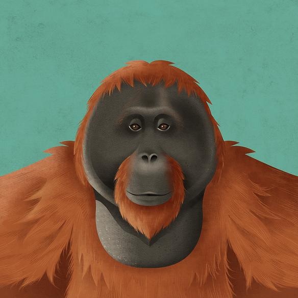 Orangoetan Apen verhoudingen Ouwehands Dierenpark orihuis