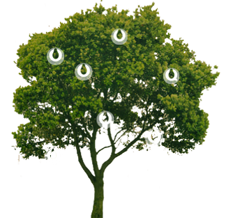 naam Peerdrops boom