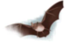 Vleermuisbunker Staatsbosbeheer Peerdrops