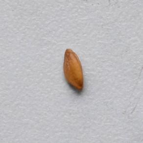 One Grain