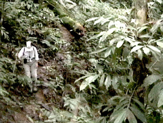 Jungle Stories Part 1:  Jodi's Jungle Adventures 2002: (3 parts) My first experience in the Born
