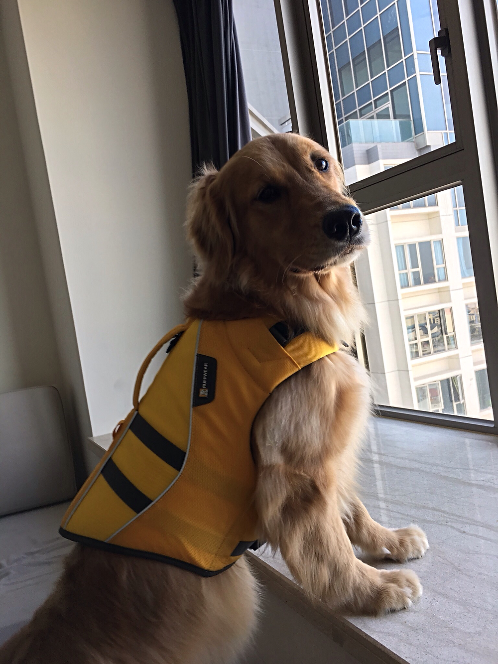 A very annoyed dog wearing a lifejacket for the first time