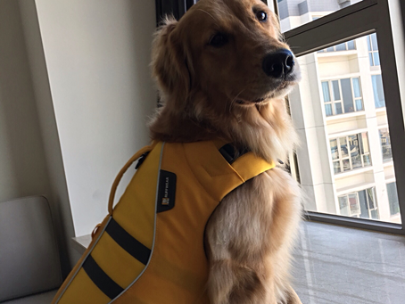 Ella's Lifejacket