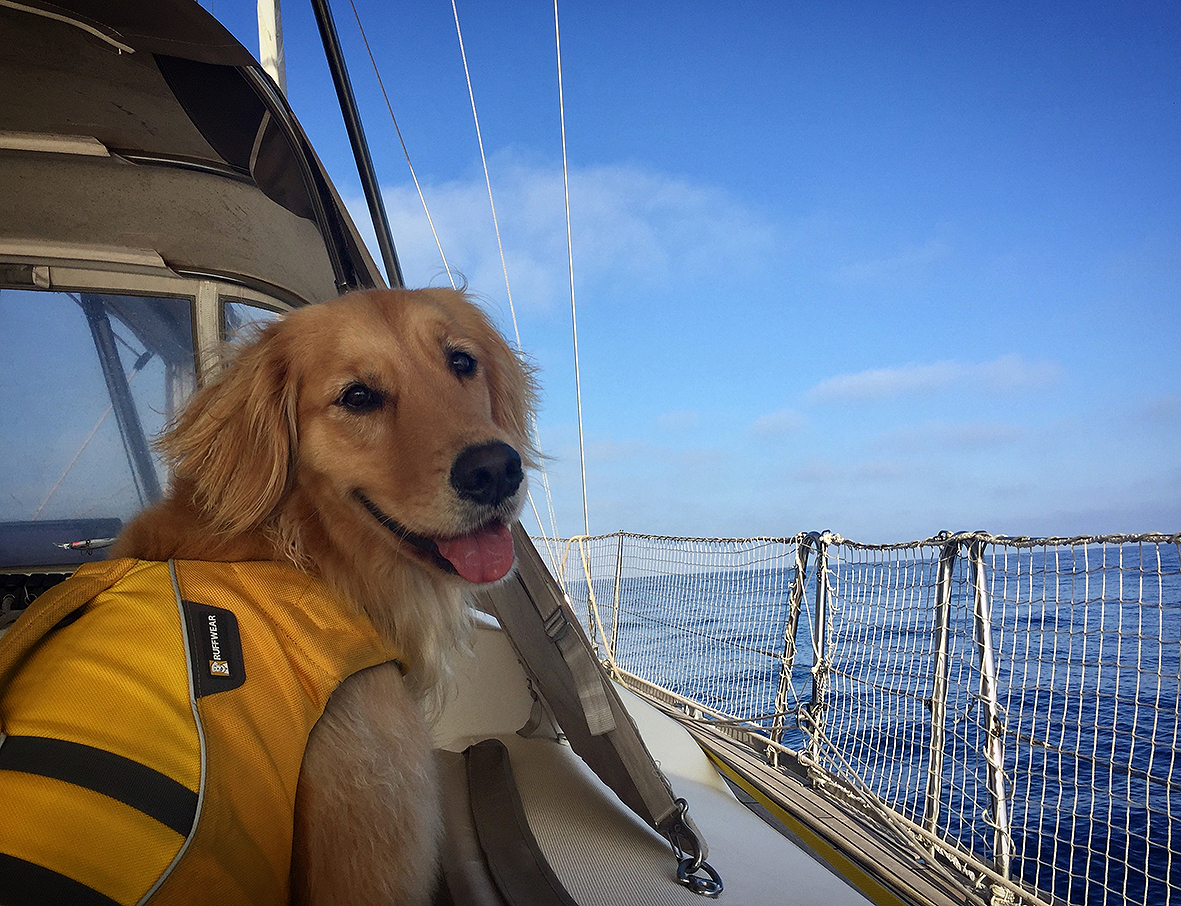 Ella enjoying the sail