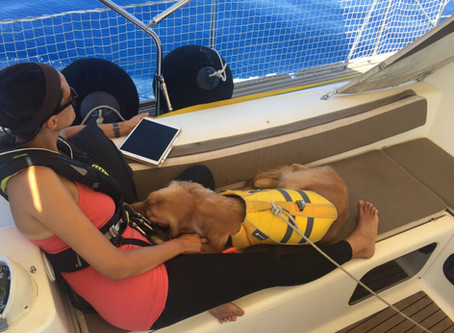 Sailing with a dog - first experiences