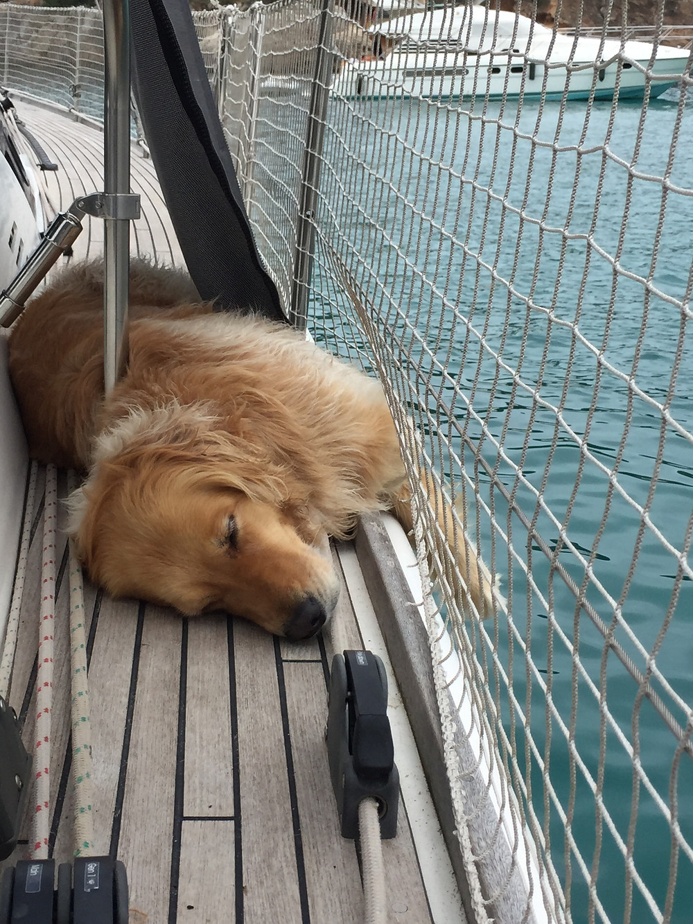 Ella the sailor dog comfortably sleeping