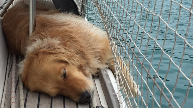 Sailing with a dog - 6 months of Ella sailing