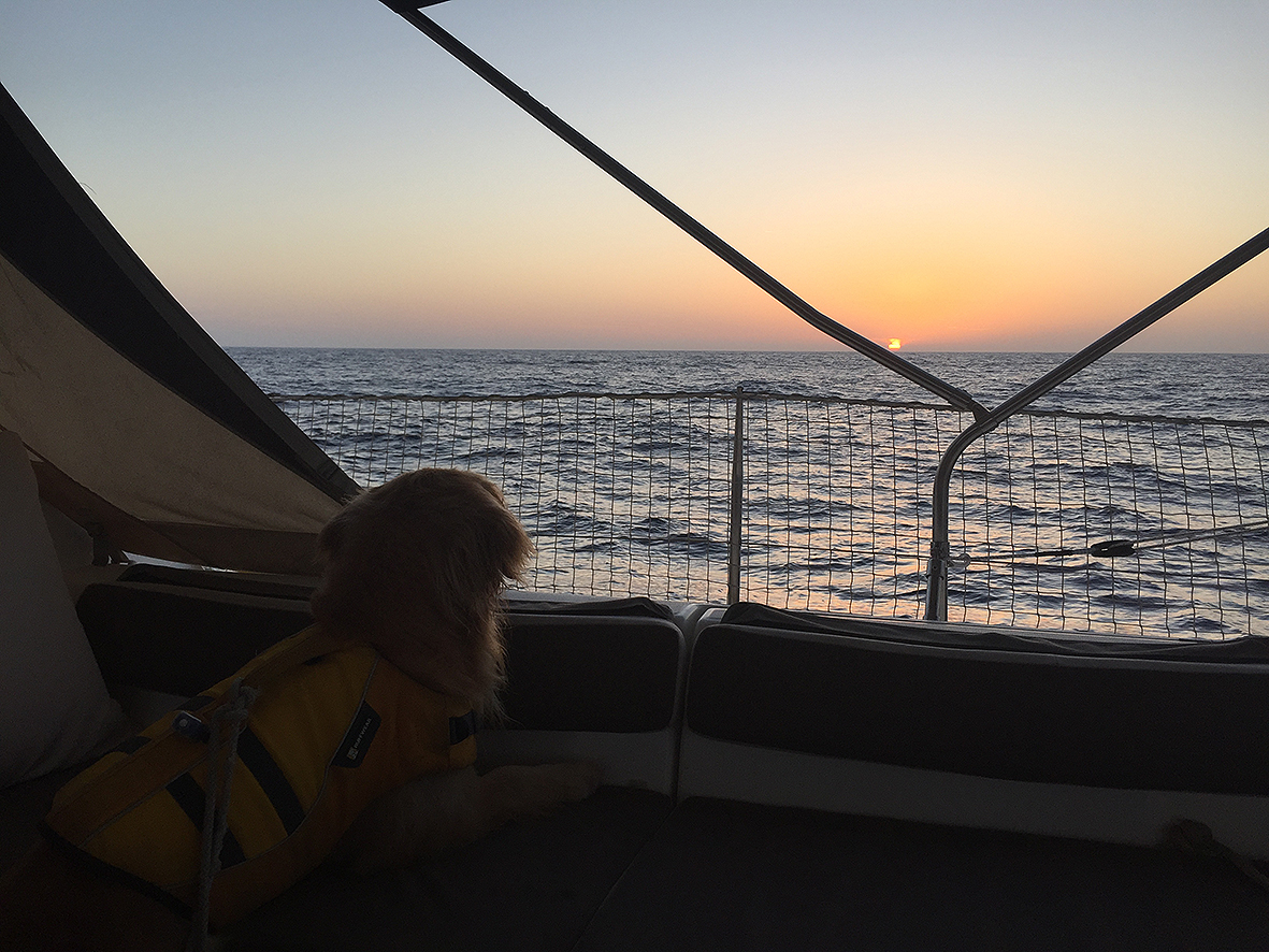 Ella enjoying the sunset