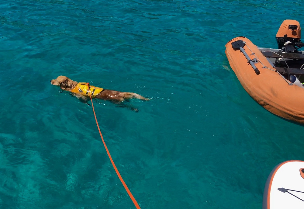 Leash swimming with the help of Ruffwear lifevest