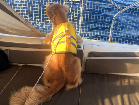 Sailing with a dog - getting ready