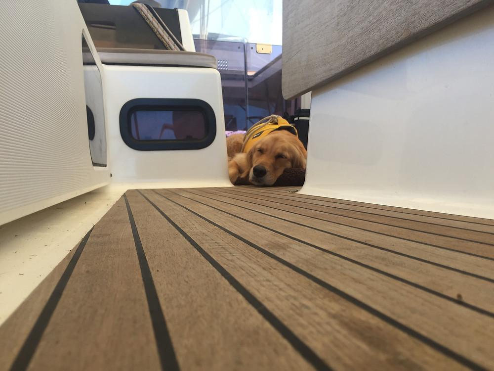 Ella the sailor dog having a snooze