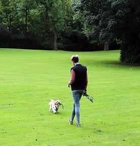 Dog walking Dog Sitting