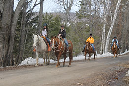 horseback riding lessons and trail rides