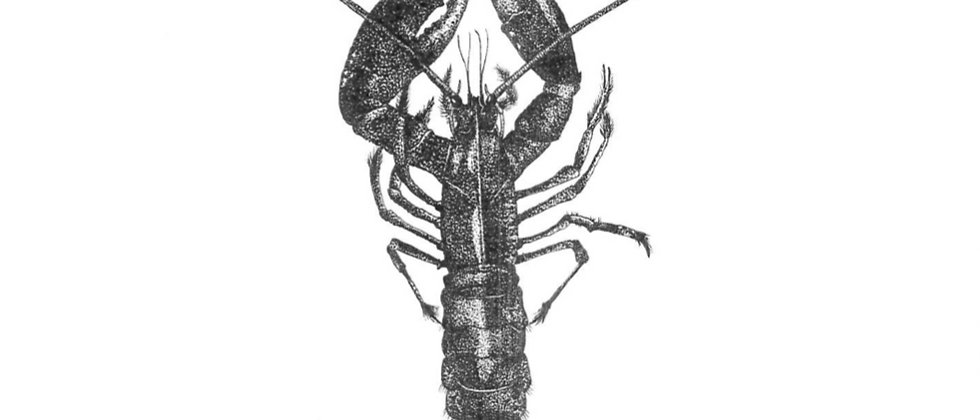 Lobster ORIGINAL DRAWING A3