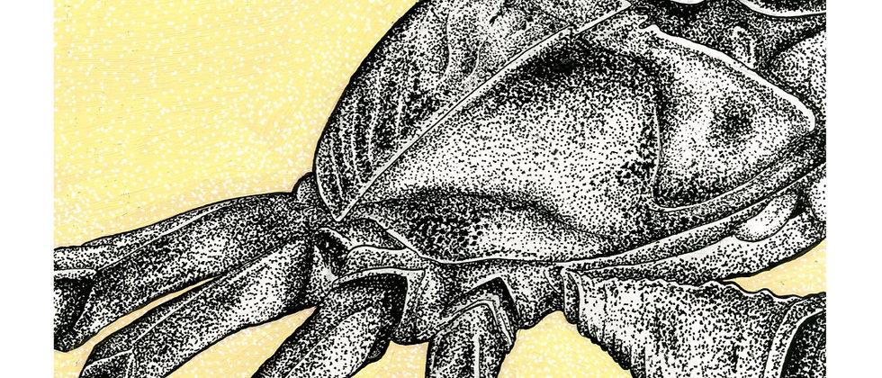 Crab FINE ART PRINT A3