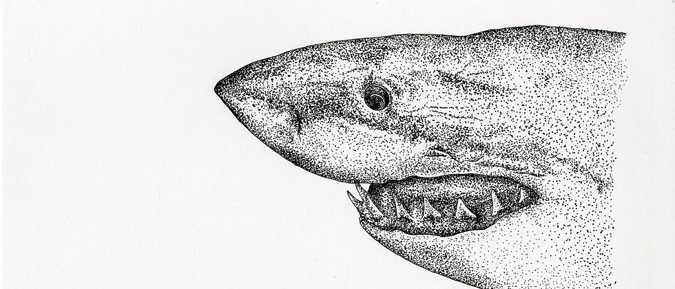 Shark Print A3