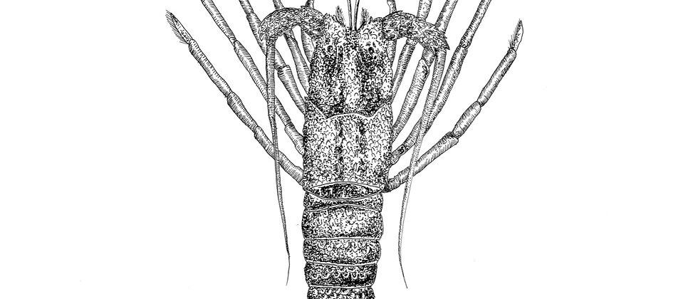Crayfish A3 Print
