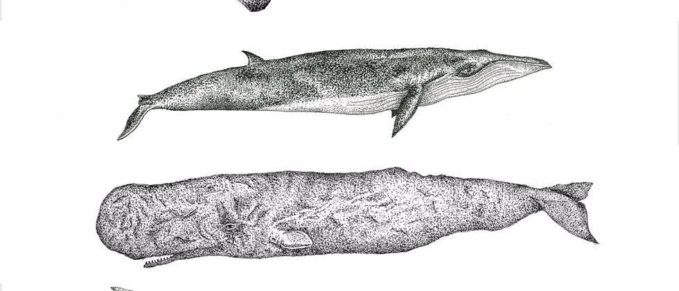 Whales Print A4