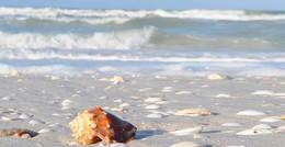 beach-ocean.jpg