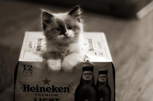 Animais/Mascotes fofos e assustadores que tornam os rótulos das cervejas muito mais bonitos e intere