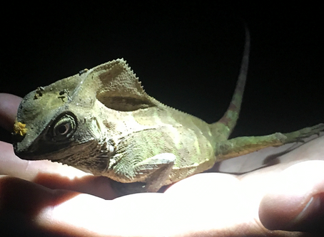 The Music of the Night - Exploring the Nocturnal Rainforest