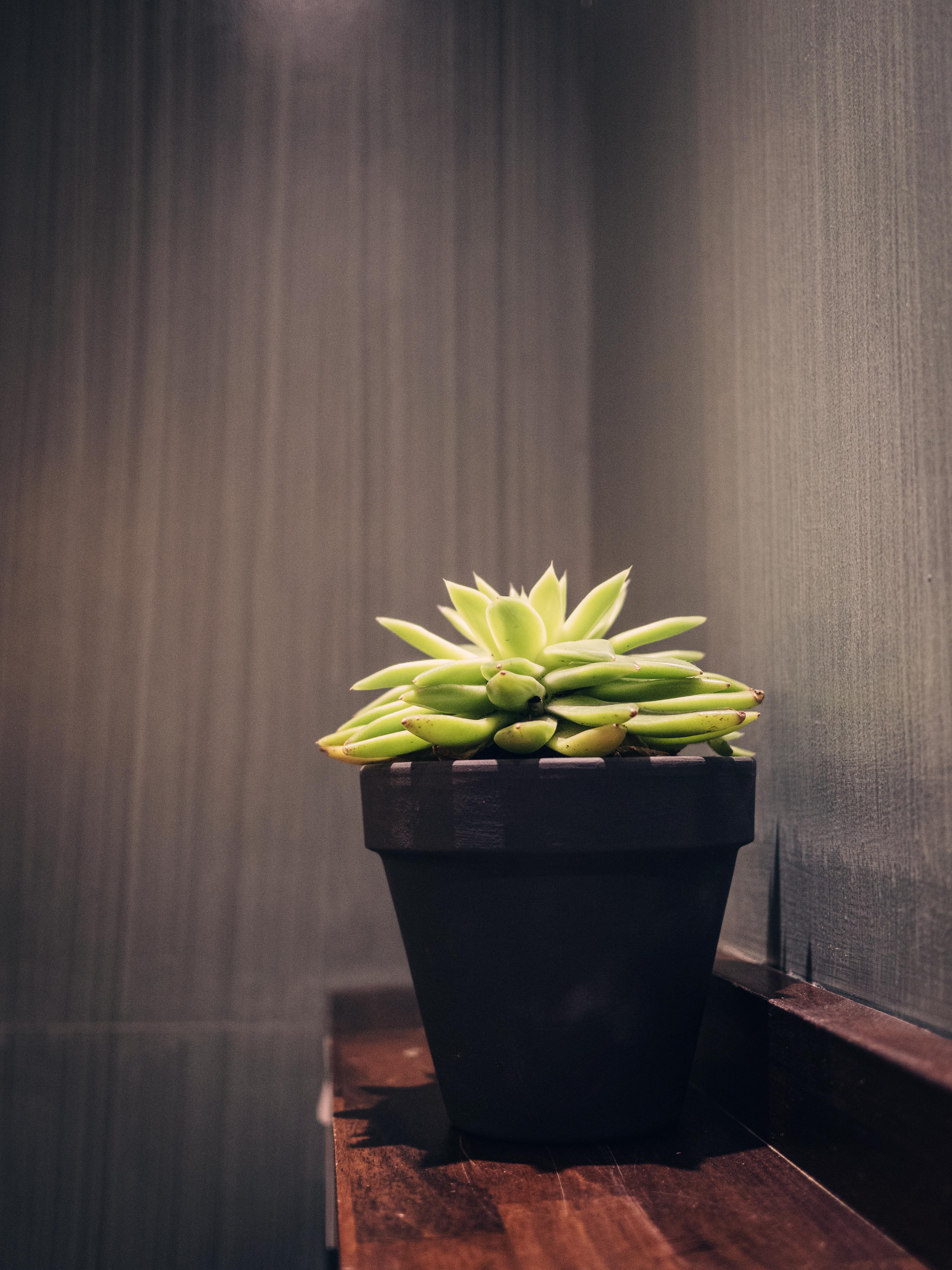 Blue Jo's Cactus 2