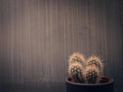 Blue Jo's Cactus & Wall
