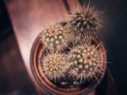 Blue Jo's Cactus, Bird's eye