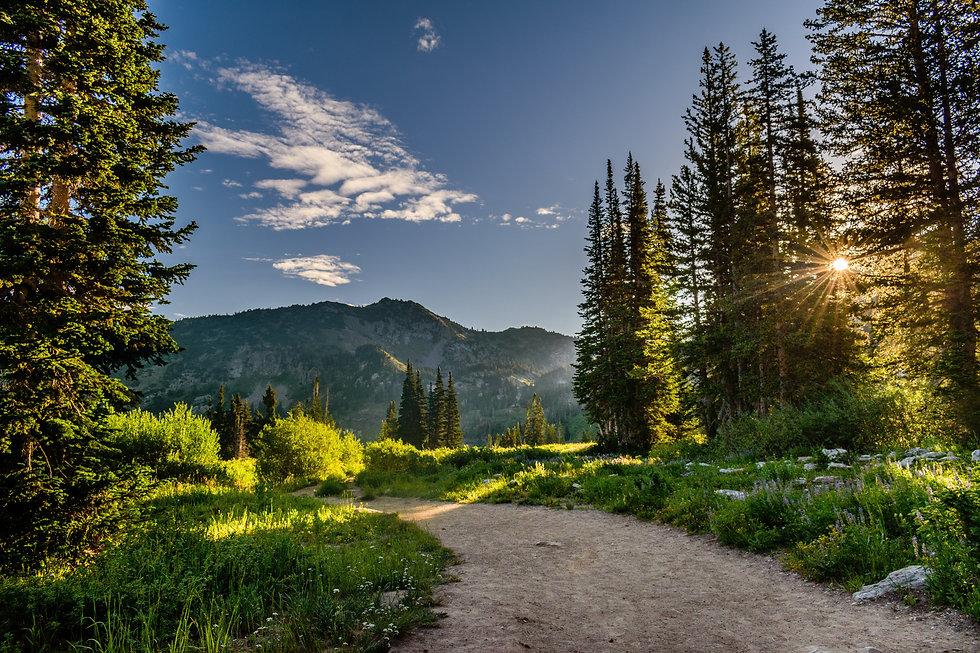 Curvway - Tout-terrain montagne foret