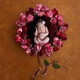 roses8x6.jpg
