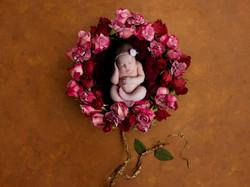 roses8x6