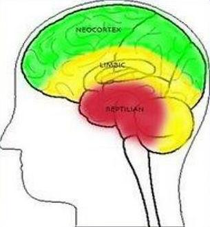 triune-brain-model-n.jpg