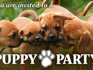 PUPPY PARTY